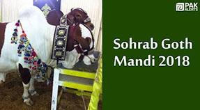 Sohrab Goth Mandi Visit by PakAlerts Eid Ul Azha 2018